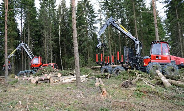 Illustrasjon: Norsk skogbruk. Foto: Åsmund Lang