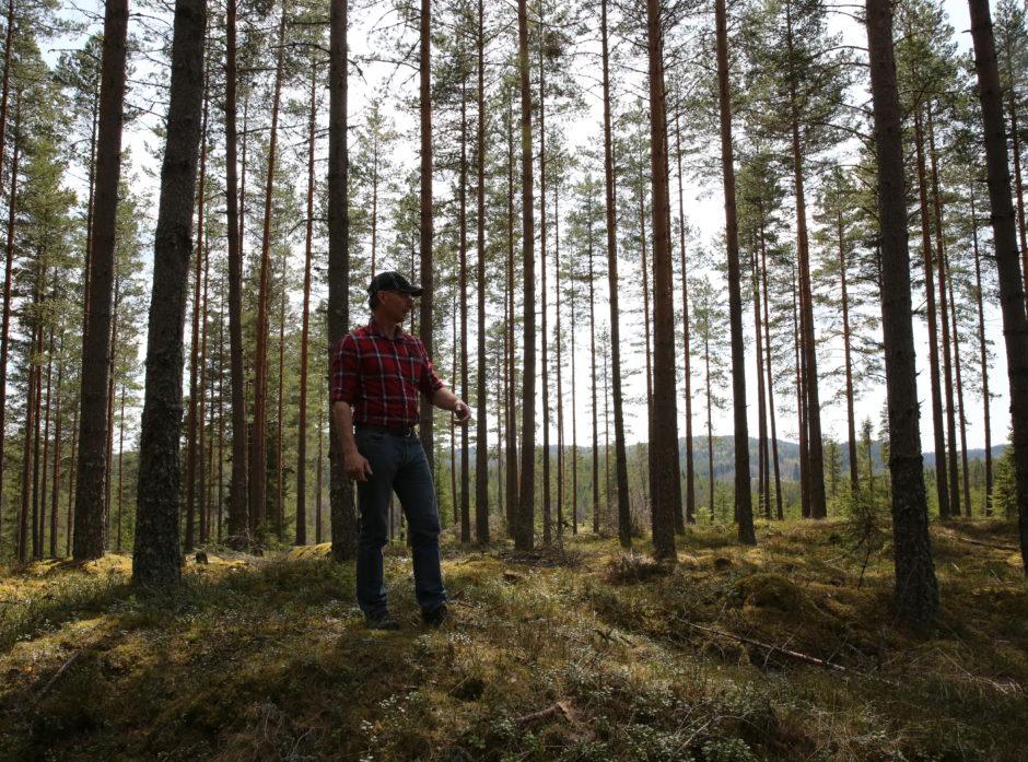 Familieskogbruket og det personlige eierskapet står sterkt i norsk skogbrukstradisjon.