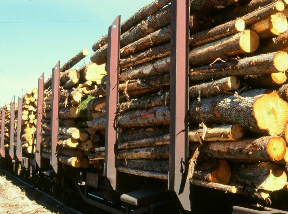 Tømmer på jernbane er en effektiv transportform. Foto: Anders Hals.