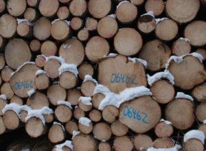 Gode resultater i skogeiersamvirket