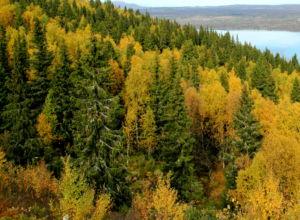Hva vet vi egentlig om riktig skjøtsel av blandingsskog?