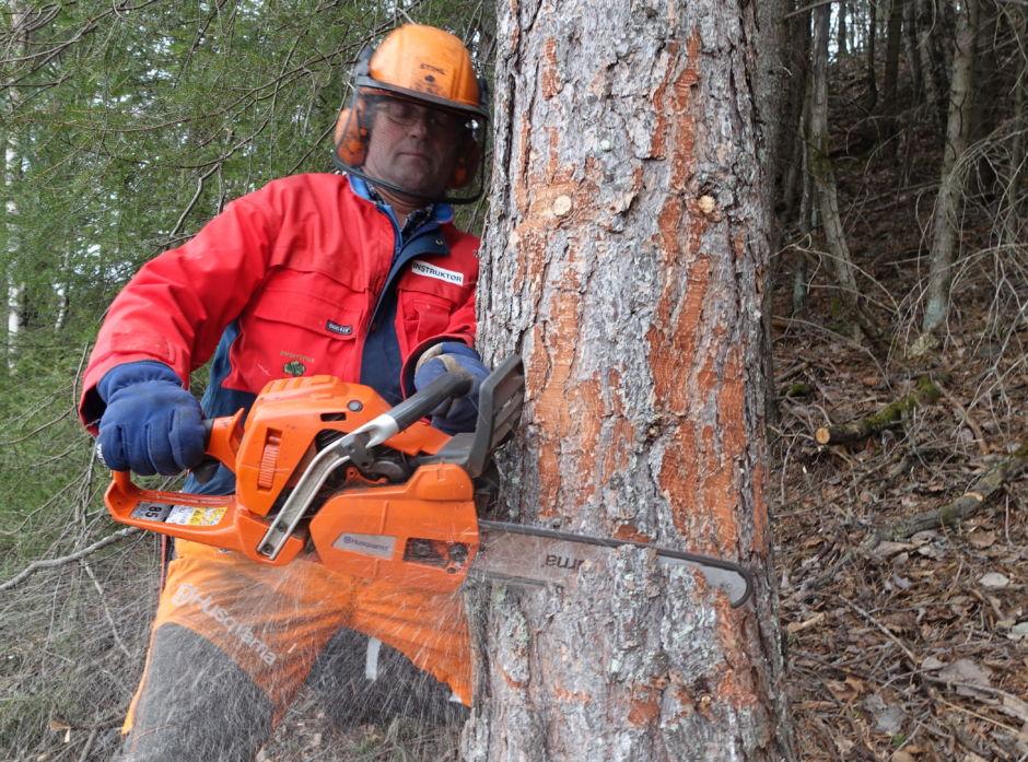 Åsmund Grønning fra Nes i Hallingdal har hogd tømmer i 40 år og vært skoginstruktør på oppdrag fra Skogkurs i 35. Her gir han tips om felling av trær.