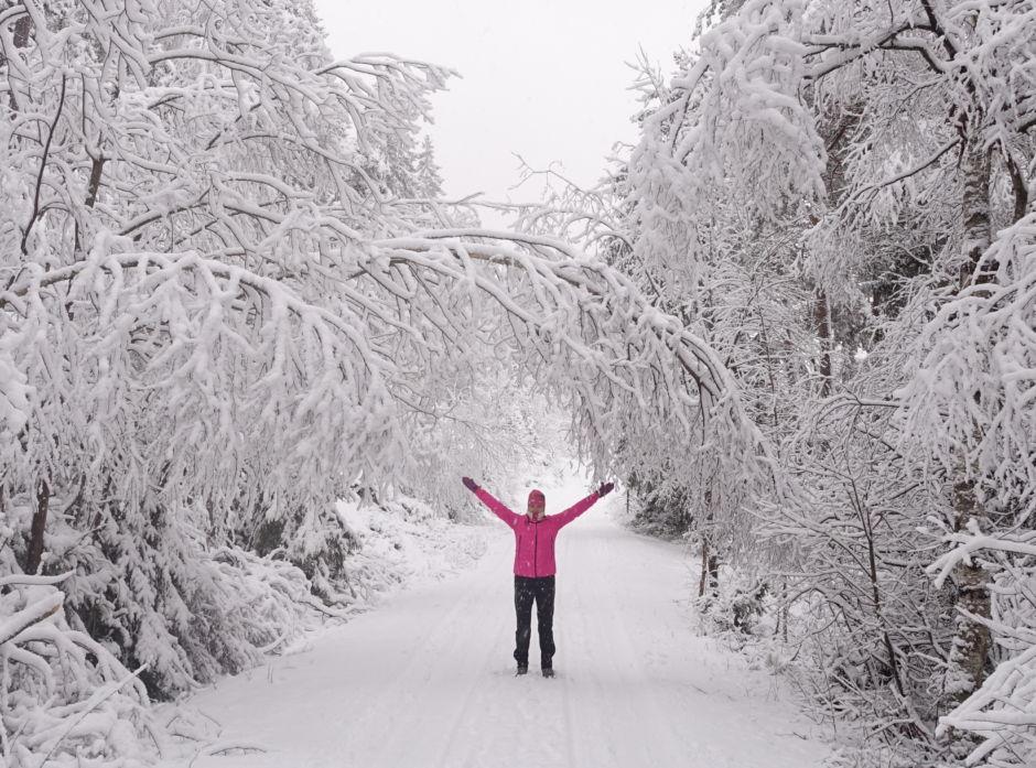 Mye snø kan skape utfordringer i skogen. Det er mye å tjene for skogeier på å forebygge snøskader og å følge med  skogen sin når det er snørike vintre.