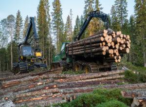SB Skog vant storanbud hos Statskog