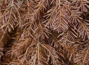 Tørken har negativ effekt på skogen