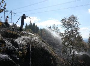 Tøft år for skogen