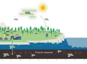 Skogen er viktig for å nå klimamålene