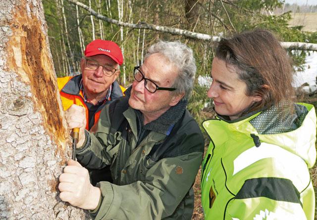Gå befaring i skogen din. Skrap av bark og ta med prøver til skogbrukslederen, er rådet fra Torstein Kvamme (midten); INgar Aadne (bak) og Sanela Jacobsen.