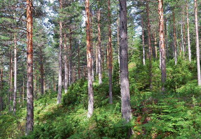 Skogeier er via miljøinformasjonsloven forpliktet til å ha kunnskap om miljøkvaliteter i egen skog, men opplysninger om for eksempel nøkkelbiotoper kan de som spør finne selv i databasen Kilden.
