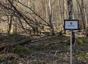 Har vernet 28 nye skogområder
