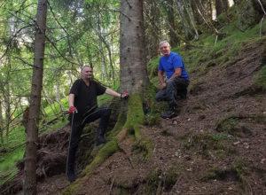 Allskog kjøper Tørvik Skog