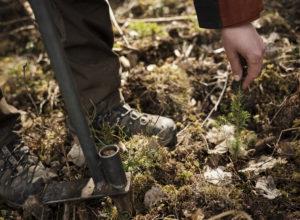 SKOGSKOLEN lanserer nettkurs i planting