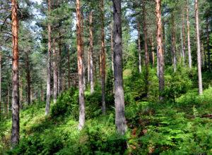 Feilaktig om kartlegging i norsk skog