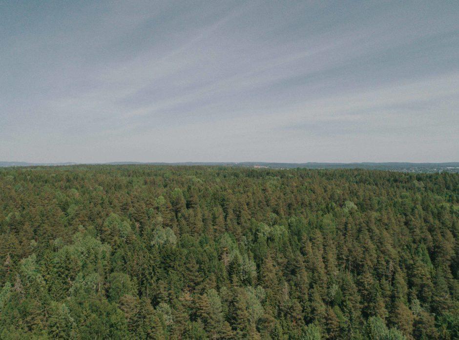 Forsikringsdekningen for trøndersk skog er lav i forhold til det som er vanlig ellers i landet. Det gir grunn til bekymring, mener Anders Børstad, nyvalgt styreleder i Skogbrand. (Foto: Jørgen Nordby/Skogbrand)