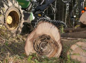 PRECISION – Webinar om råte i skog 23.november
