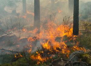 Ny og bedre skogbrannvarsling
