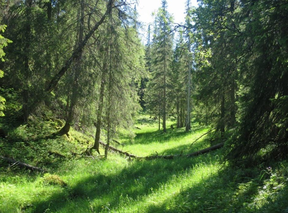 Rubben naturreservat i Namsskogan kommune. Foto: Terje Blindheim