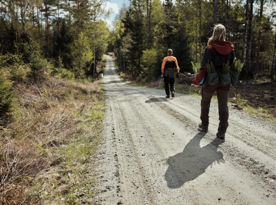 Over 37 prosent av Norges landareal er dekket av skog. I motsetning til hva som skjer i regnskogen, driver Norge et av verdens mest bærekraftige skogbruk. Her er skogeier på vei ut for å plante etter hogst.