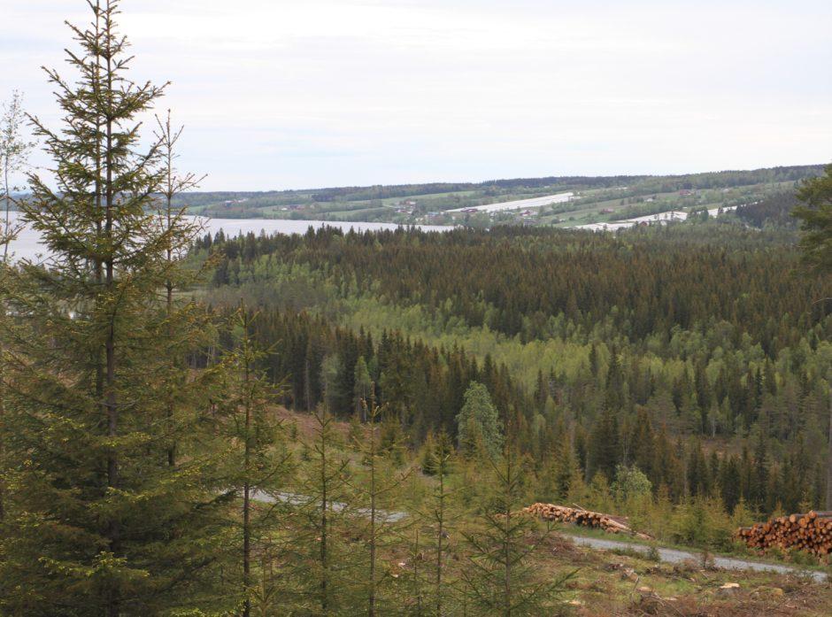 Skogen i Norge dekker over 37 prosent av Norges landareal og for hvert år øker volumet, men økningen går saktere enn før.