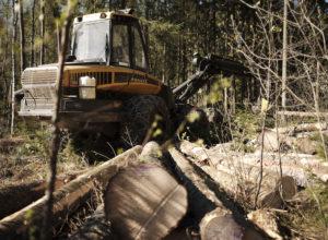 Regjeringen overser skogbruket i klimakampen